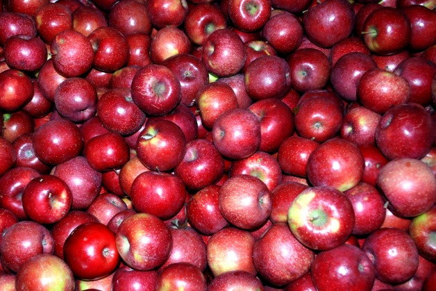 red_apples473